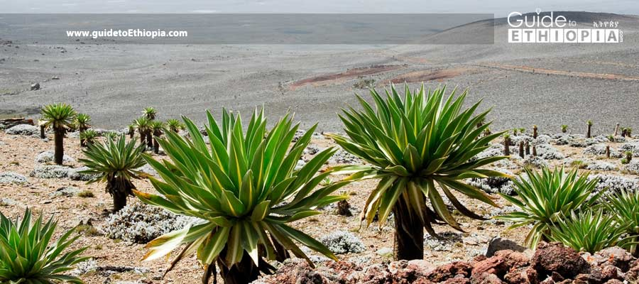 Bale-Mountains-National-Park