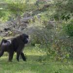 Eastern-langano-Natural-reserve