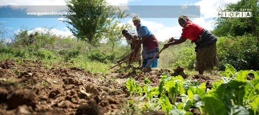 Ethiopian-Economy