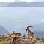 Wildlife-Safaris