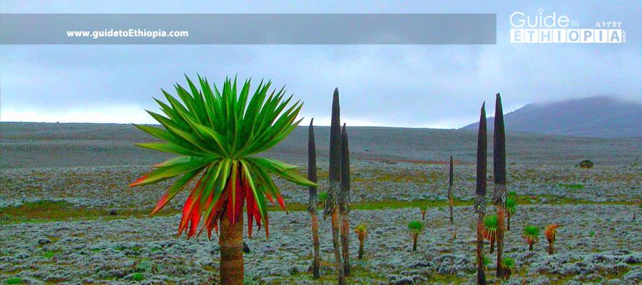 Alatish-National-Park