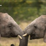 Babile-Elephant-Sanctuary