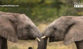Babile-Elephant-Sanctuary