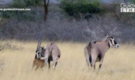 KaftaShiraro-National-Park