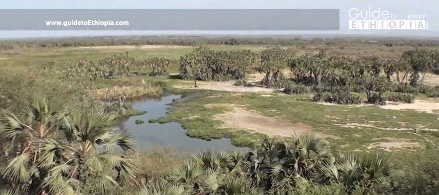 awash-national-park