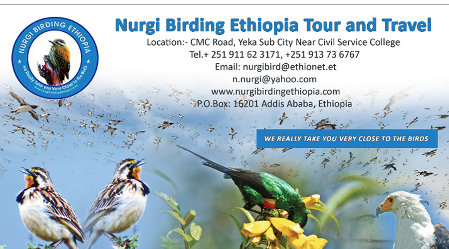 Nurgi-birding-Ethiopia-tour-and-travel